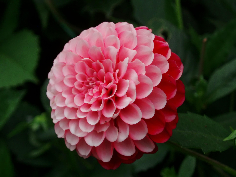 fleurs · le monde des images: photos et dessins